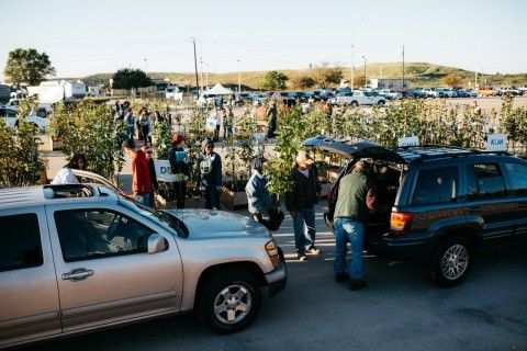 2 cars lined up as people load them with a small free tree